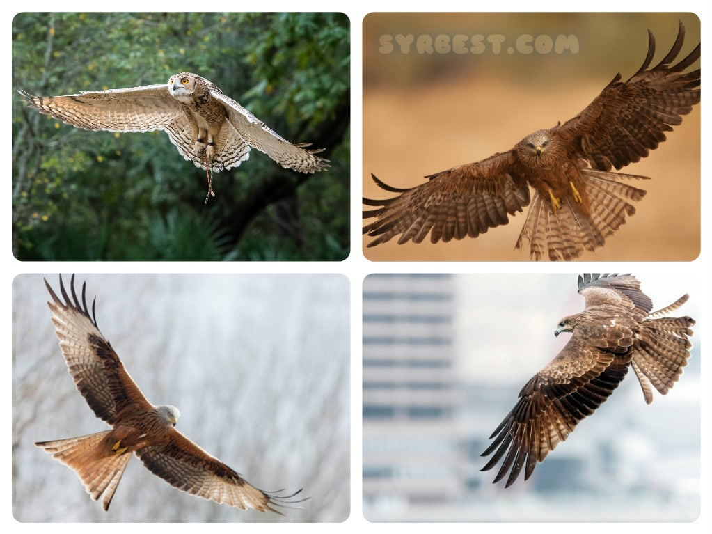 تحميل Birds of prey